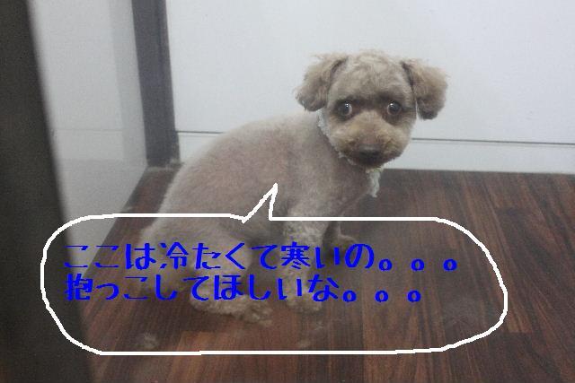 はちみつ豆乳_b0130018_15404398.jpg