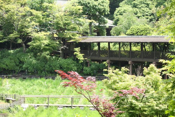 本土寺を参拝します。_a0214329_8351356.jpg