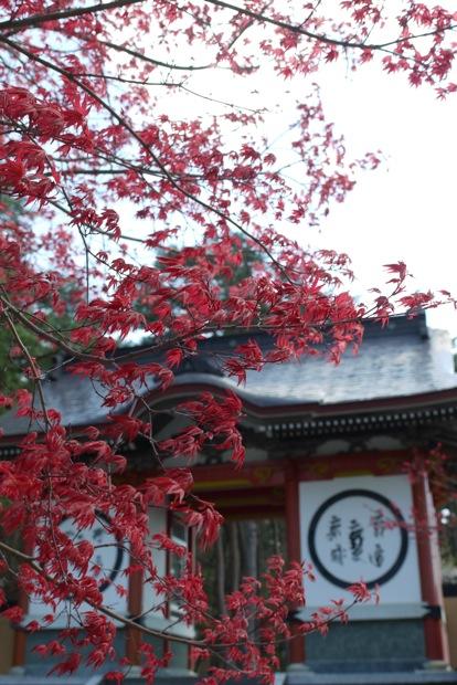 春なのに赤いもみじ_d0001843_0124483.jpg