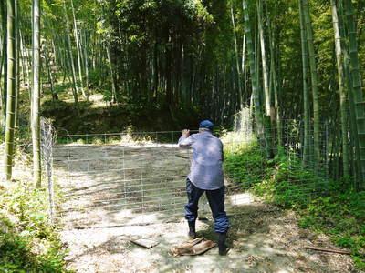 絶品たけのこ『山竹』の竹林に独占取材!!_a0254656_1744213.jpg