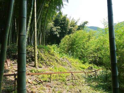 絶品たけのこ『山竹』の竹林に独占取材!!_a0254656_17504815.jpg