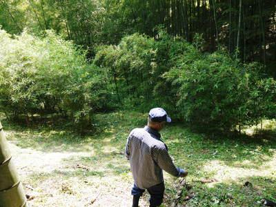 絶品たけのこ『山竹』の竹林に独占取材!!_a0254656_17555227.jpg