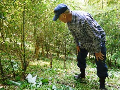 絶品たけのこ『山竹』の竹林に独占取材!!_a0254656_18154726.jpg