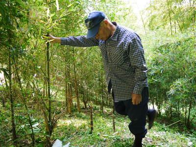 絶品たけのこ『山竹』の竹林に独占取材!!_a0254656_18181074.jpg