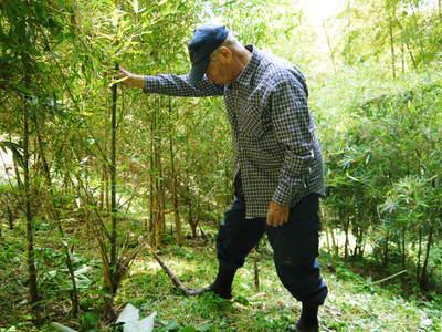 絶品たけのこ『山竹』の竹林に独占取材!!_a0254656_1821968.jpg