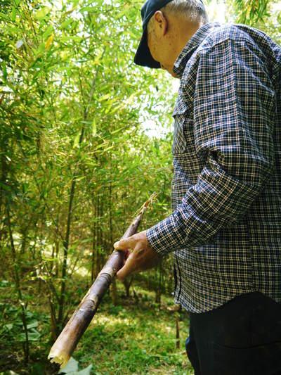 絶品たけのこ『山竹』の竹林に独占取材!!_a0254656_1822393.jpg