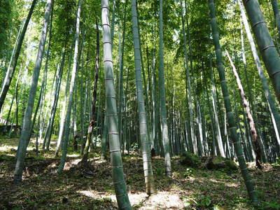 絶品たけのこ『山竹』の竹林に独占取材!!_a0254656_1842352.jpg