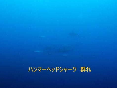 5月22日 馬鼻崎・赤土・西崎_d0113459_1981878.jpg