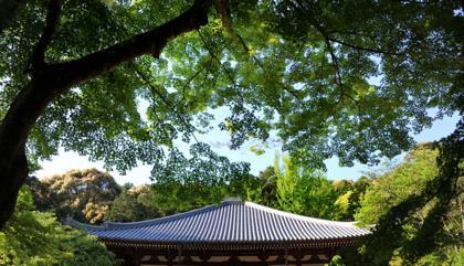 観光客が少なくなった時間帯....新緑の中....静かな時間が..._b0194185_2238509.jpg
