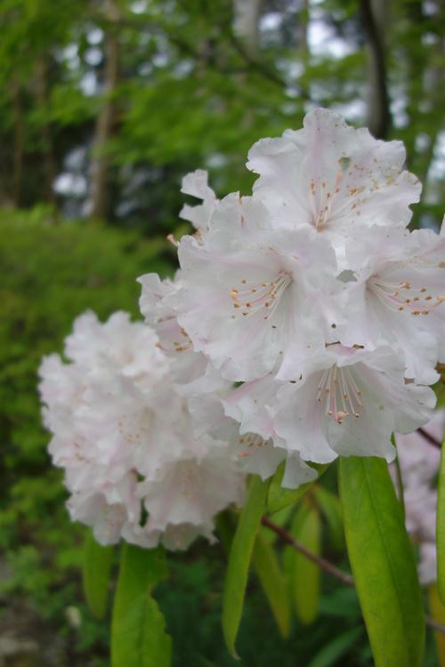 湿性花園_a0110787_20412535.jpg