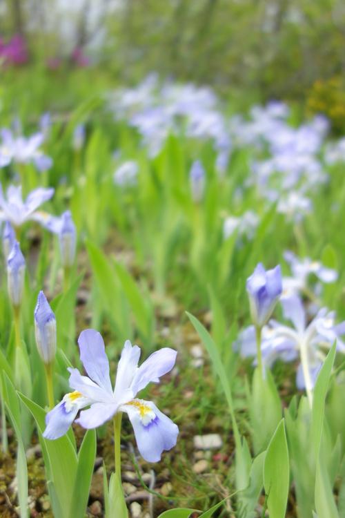 湿性花園_a0110787_2047205.jpg
