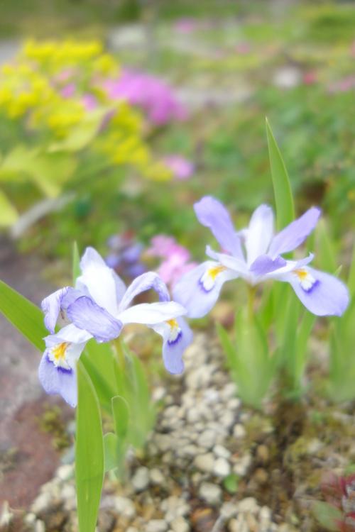 湿性花園_a0110787_20504586.jpg