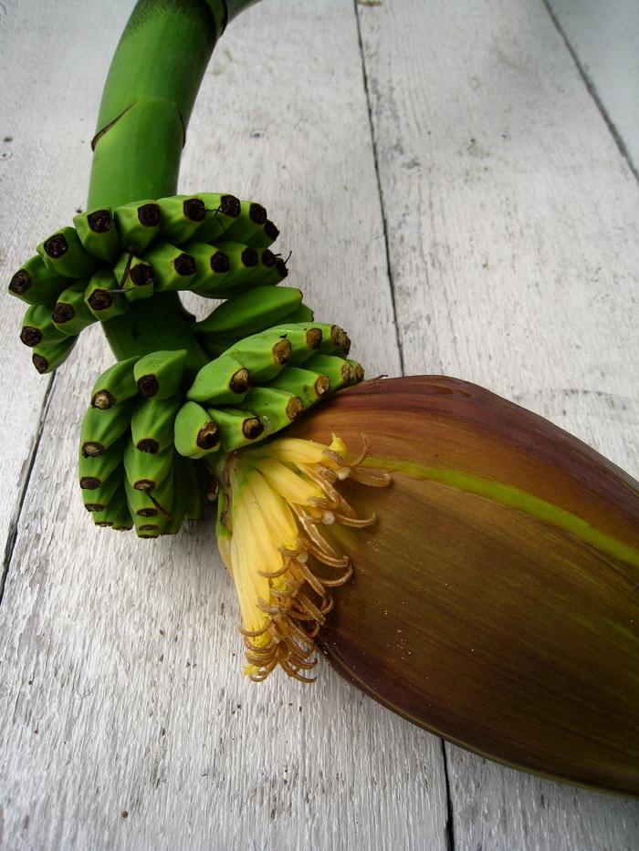 バナナの花_e0303187_20512567.jpg