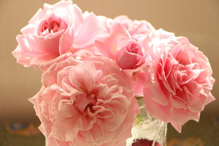 バラの季節から初夏の花へ_d0150720_10441020.jpg