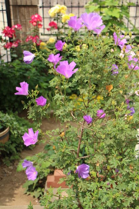 バラの季節から初夏の花へ_d0150720_1045928.jpg