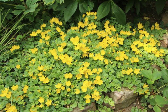 バラの季節から初夏の花へ_d0150720_10505832.jpg