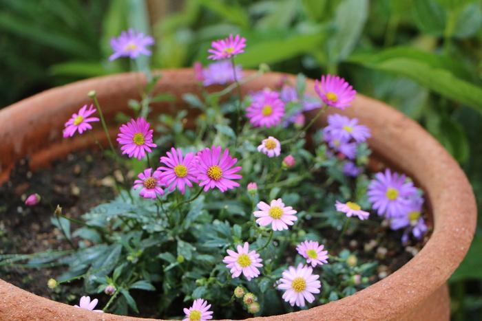 バラの季節から初夏の花へ_d0150720_10511489.jpg