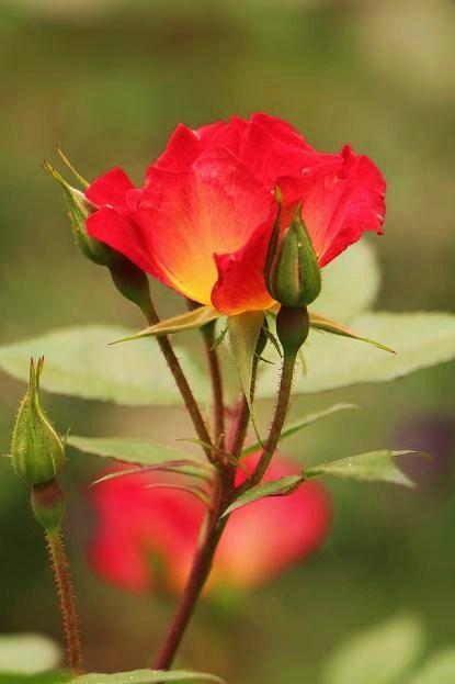 バラの季節から初夏の花へ_d0150720_11273233.jpg