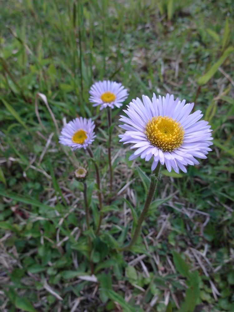 花盛り_c0111229_18531545.jpg