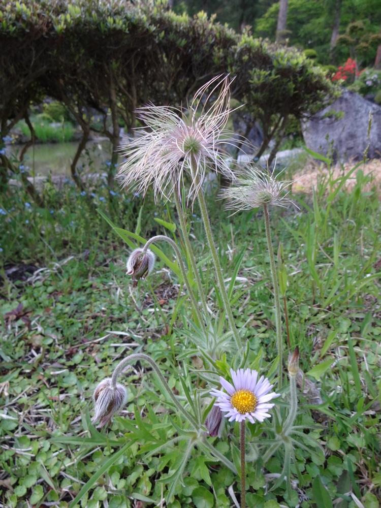 花盛り_c0111229_1853582.jpg