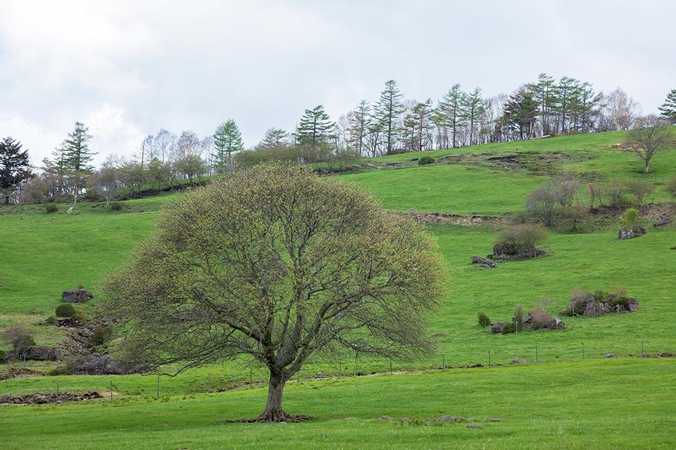 野辺山のヤマナシはほぼ例年並みに咲いています_b0179231_00092591.jpg