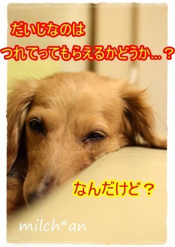 b0115642_20574424.jpg