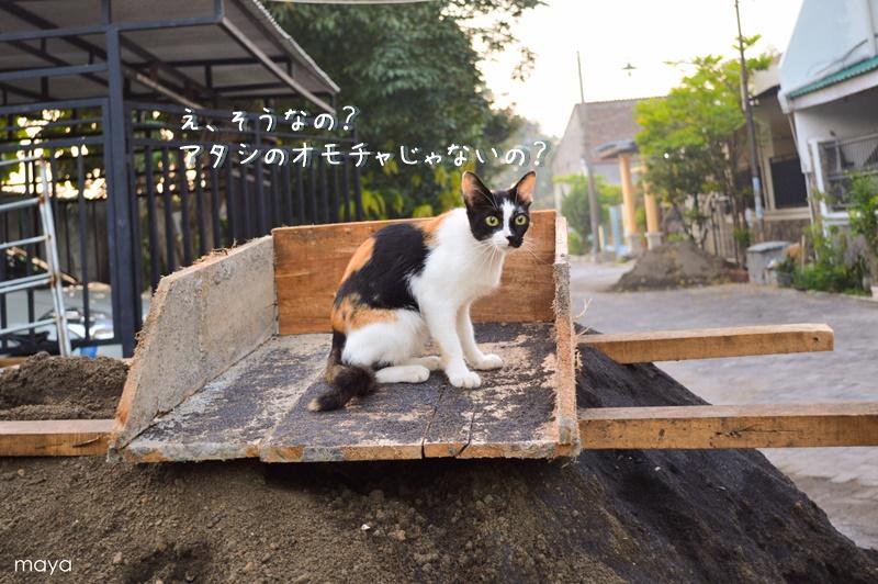 f0260843_9441180.jpg