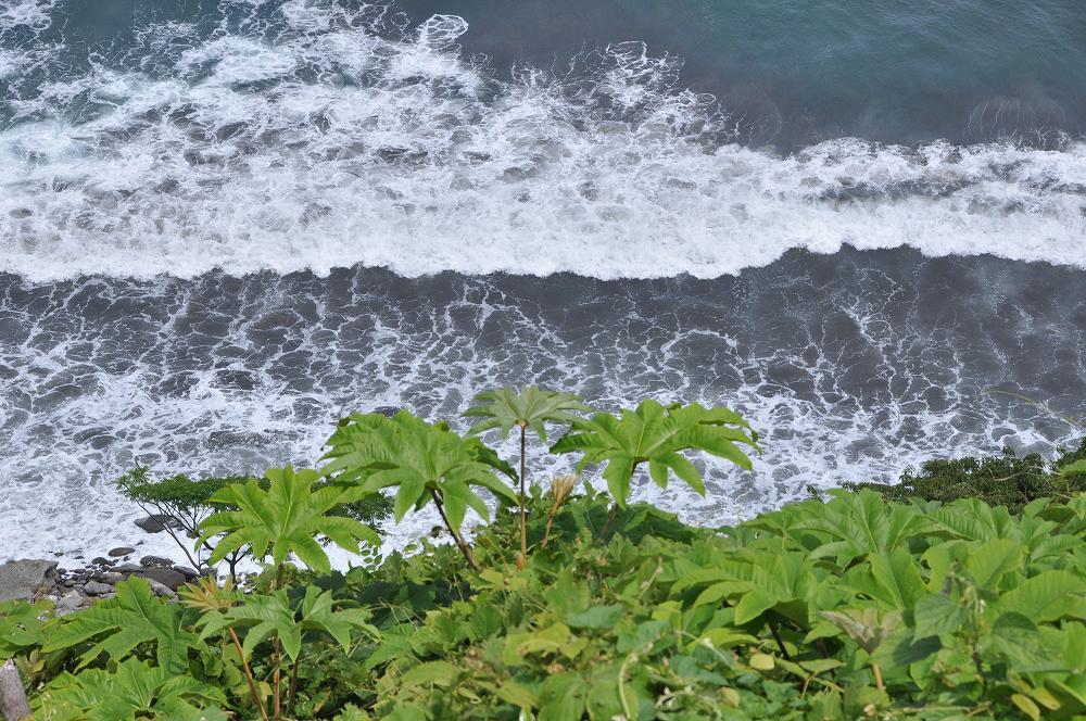 海上の子育て島_c0059854_21374685.jpg