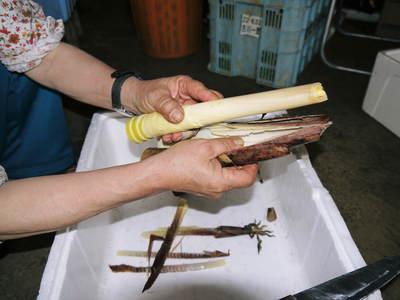 絶品たけのこ『山竹』 下茹でいらずの簡単皮むき!!美味しさの秘密に迫る!!_a0254656_2003612.jpg
