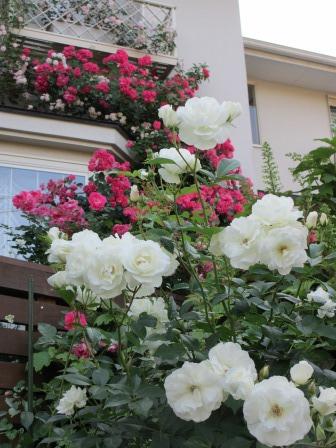 お花いっぱいで癒されています_a0243064_07060060.jpg