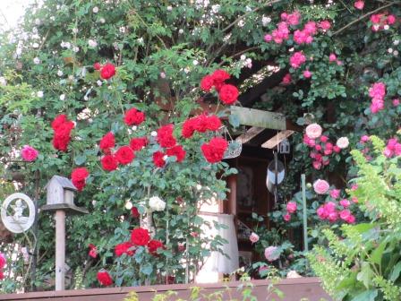 お花いっぱいで癒されています_a0243064_07101508.jpg