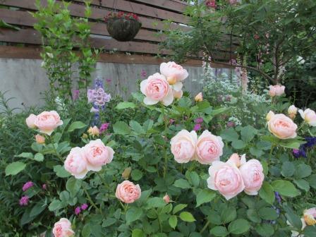 お花いっぱいで癒されています_a0243064_07124323.jpg