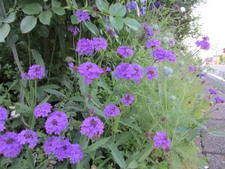 お花いっぱいで癒されています_a0243064_07251485.jpg