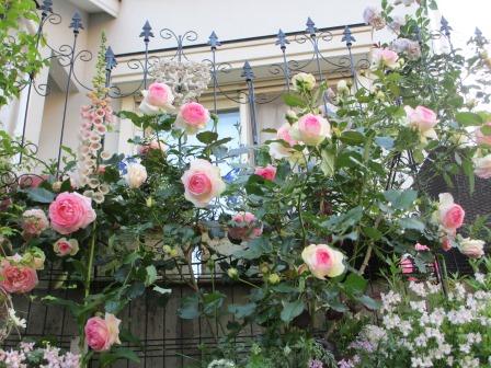 お花いっぱいで癒されています_a0243064_07304299.jpg