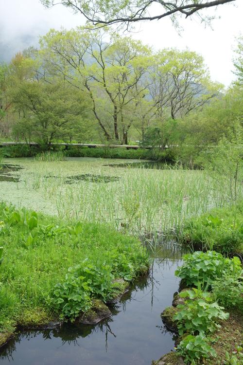 湿性花園_a0110787_9194539.jpg