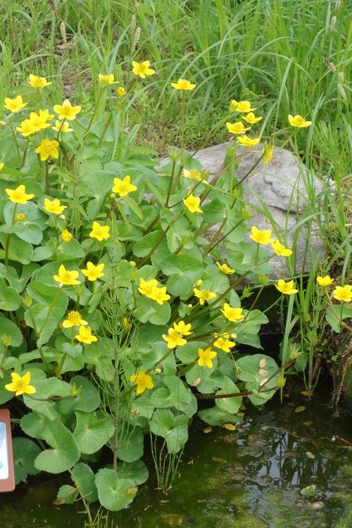 湿性花園_a0110787_9265833.jpg