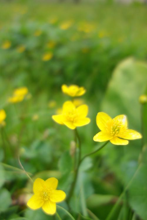 湿性花園_a0110787_934871.jpg