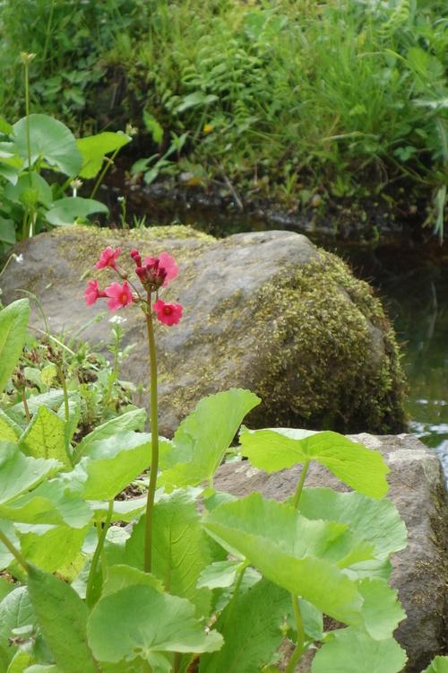 湿性花園_a0110787_9363393.jpg