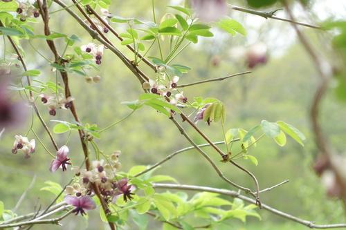 湿性花園_a0110787_9385548.jpg