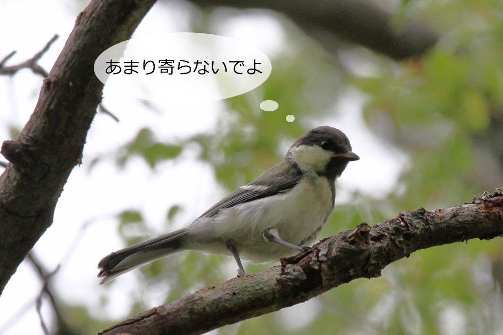 b0174191_21402302.jpg