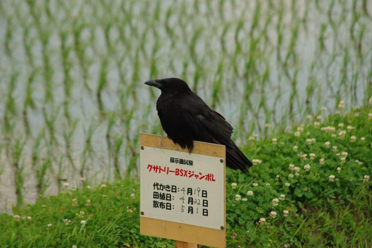 b0028598_20115817.jpg