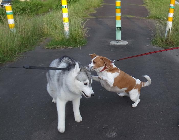 三匹の犬 (*^_^*)_c0049299_21203275.jpg