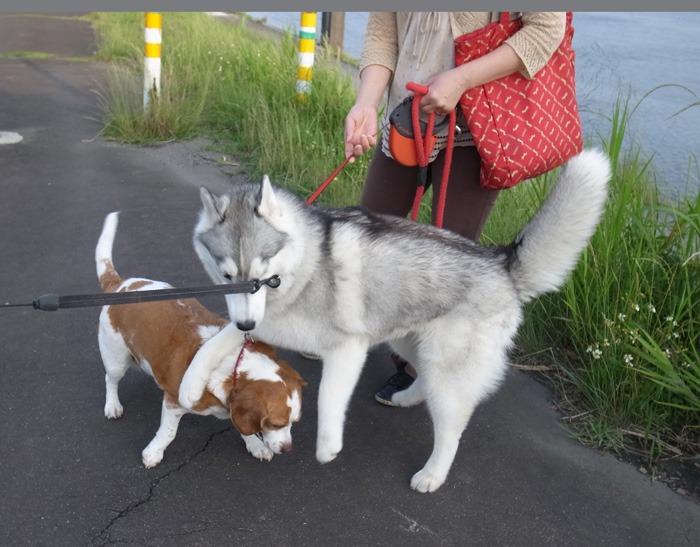 三匹の犬 (*^_^*)_c0049299_21204167.jpg