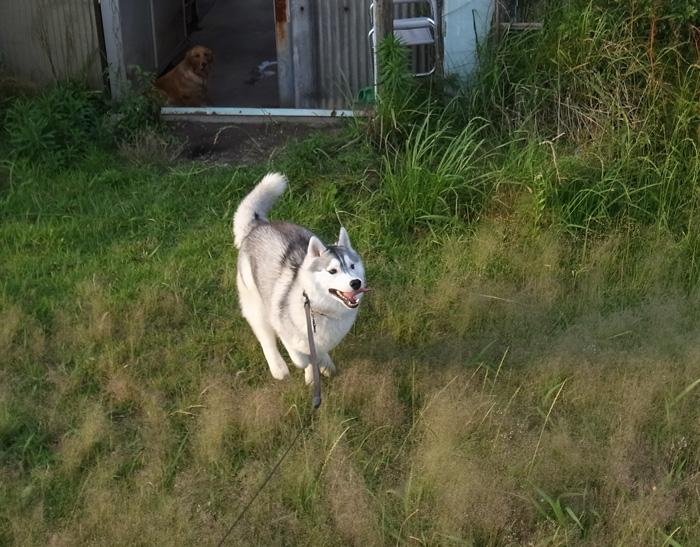 三匹の犬 (*^_^*)_c0049299_21212250.jpg