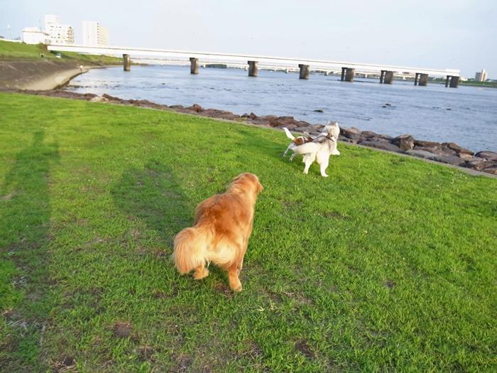 三匹の犬 (*^_^*)_c0049299_21221673.jpg