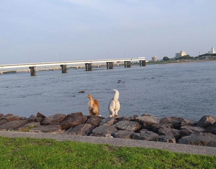 三匹の犬 (*^_^*)_c0049299_21225613.jpg