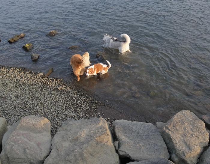 三匹の犬 (*^_^*)_c0049299_21232995.jpg