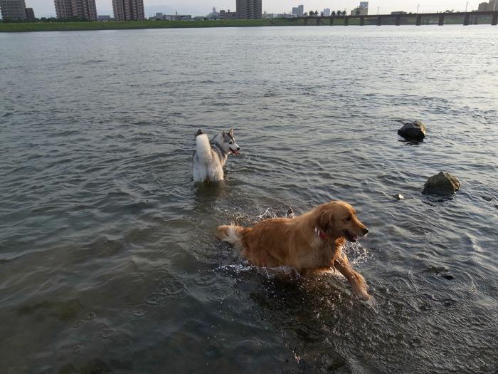 三匹の犬 (*^_^*)_c0049299_21242990.jpg