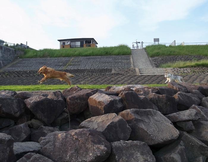 三匹の犬 (*^_^*)_c0049299_21254960.jpg