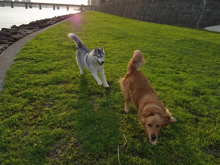 三匹の犬 (*^_^*)_c0049299_21262212.jpg